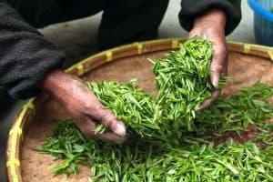 Tea Leaves Northern Tea Merchants